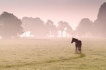Die Senner Pferde im Naturschutz