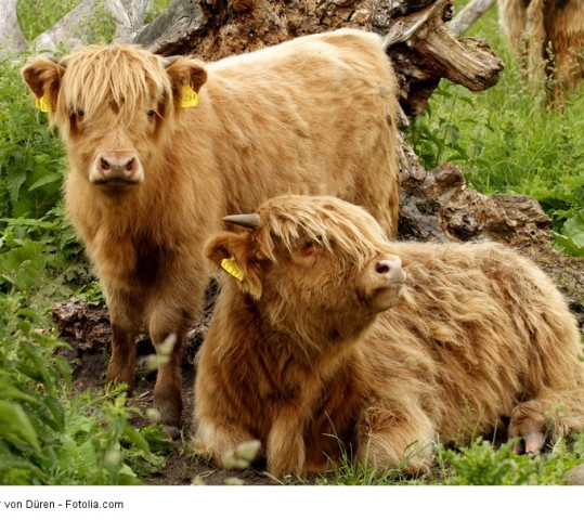 Schottland in der Senne